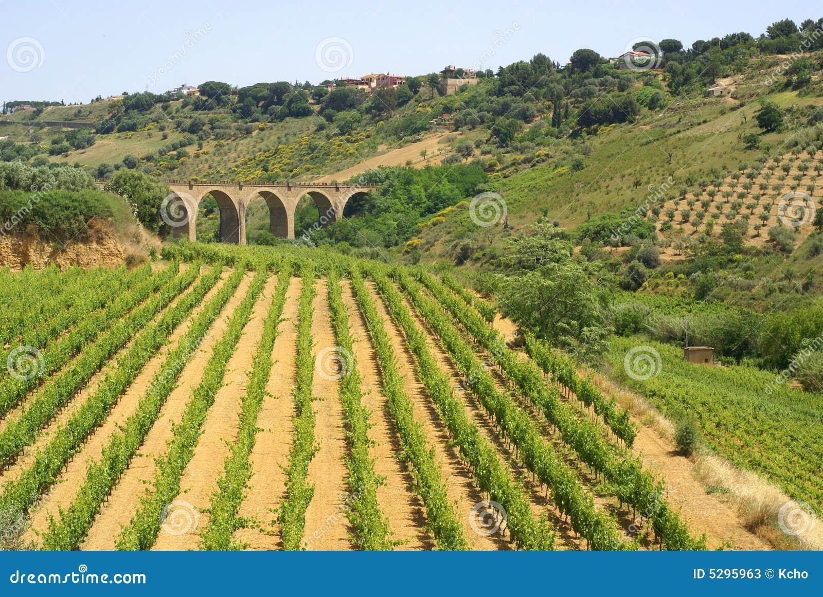 Zdaniem vinery
