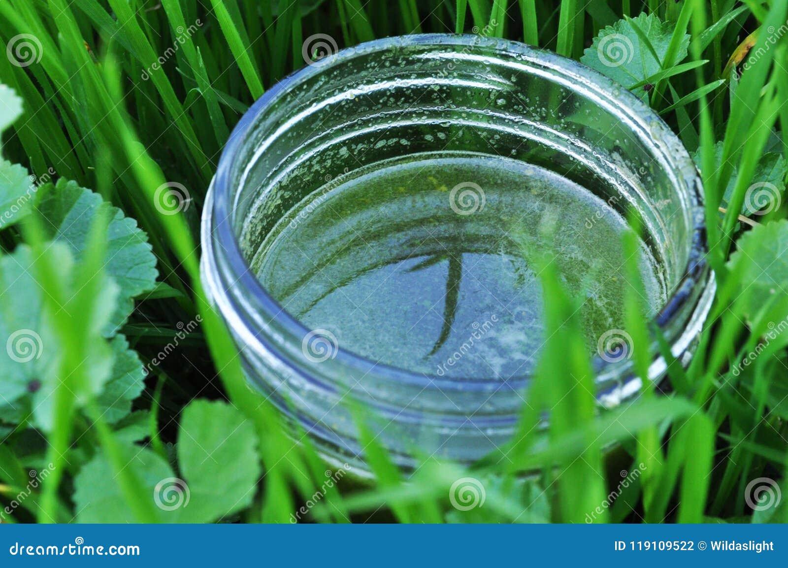 Zdrowy i wyśmienicie zielony sok