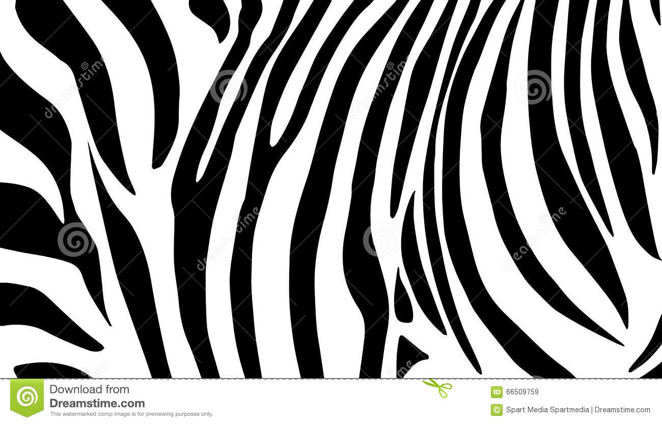 Download Zebra Black And White Pattern Stock Vector - Illustration of baby, africa: 66509759