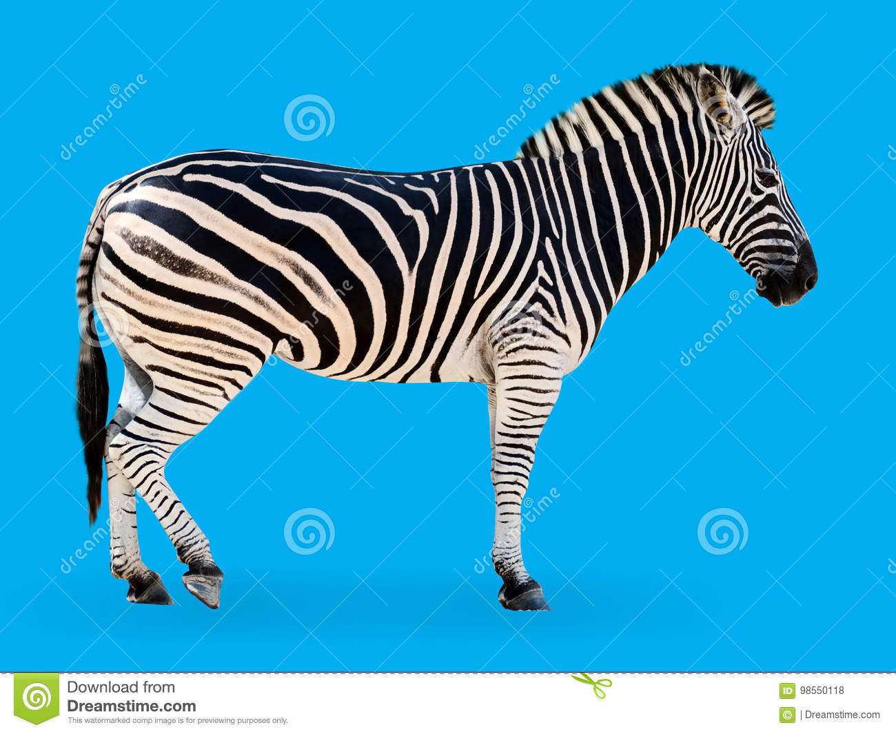 Download 760 Background Zebra Blue Paling Keren