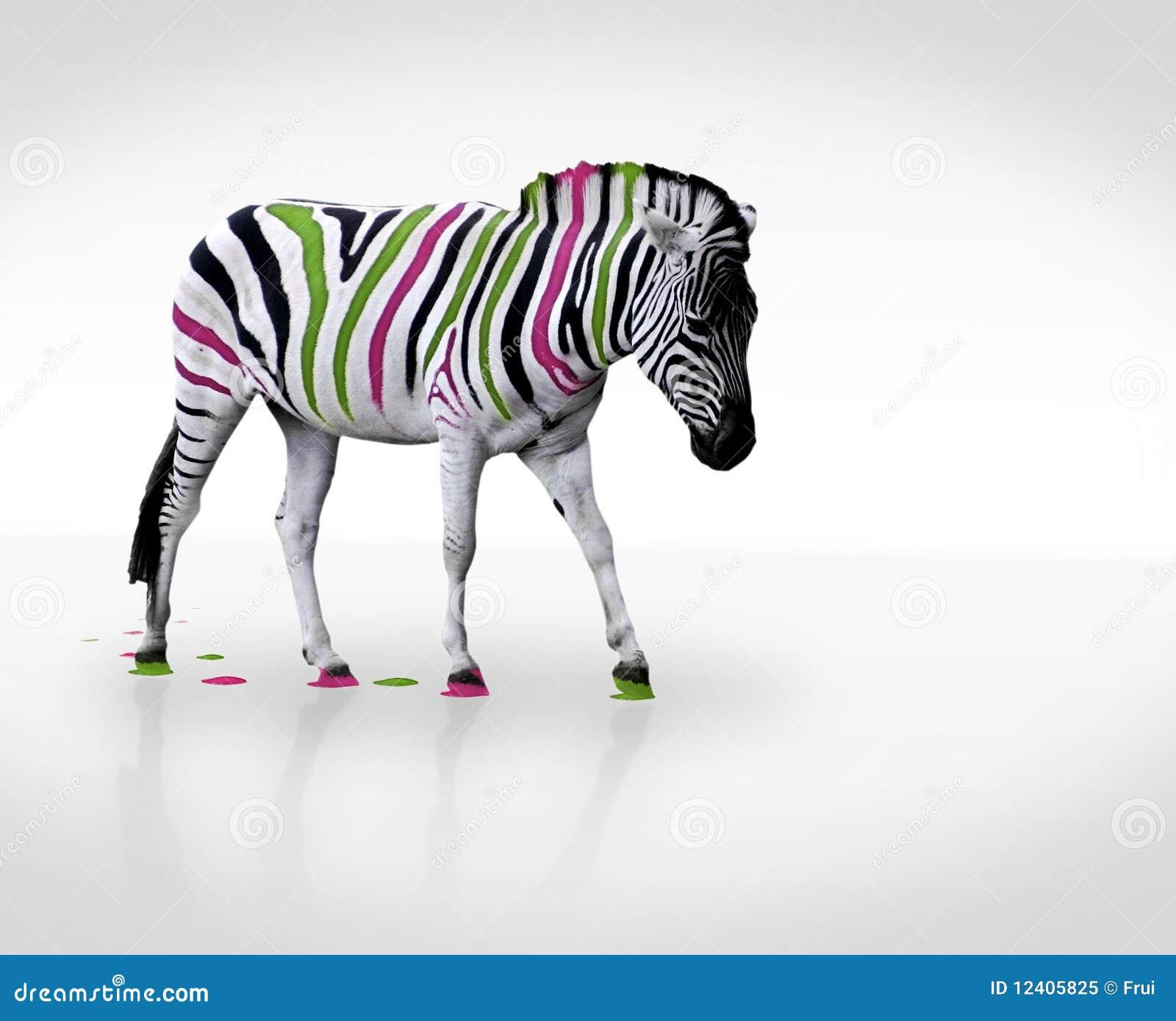 Zebra creativa