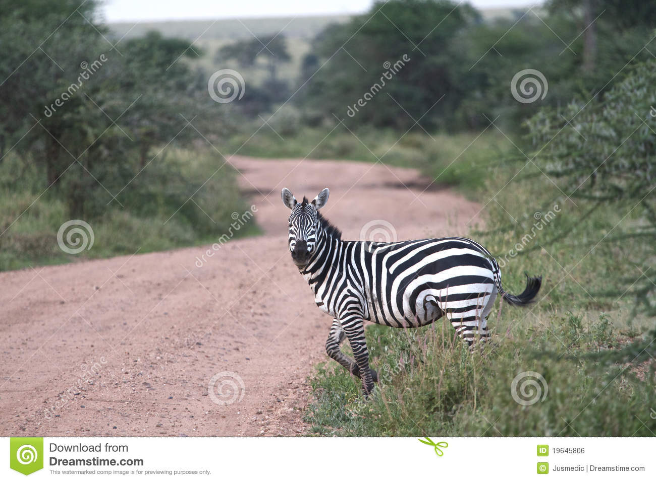 Animated zebra crossing