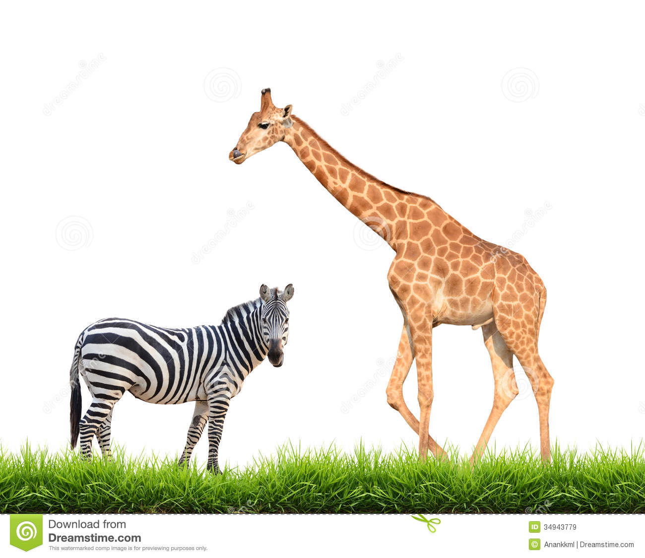 Zebra giraffe with gre...