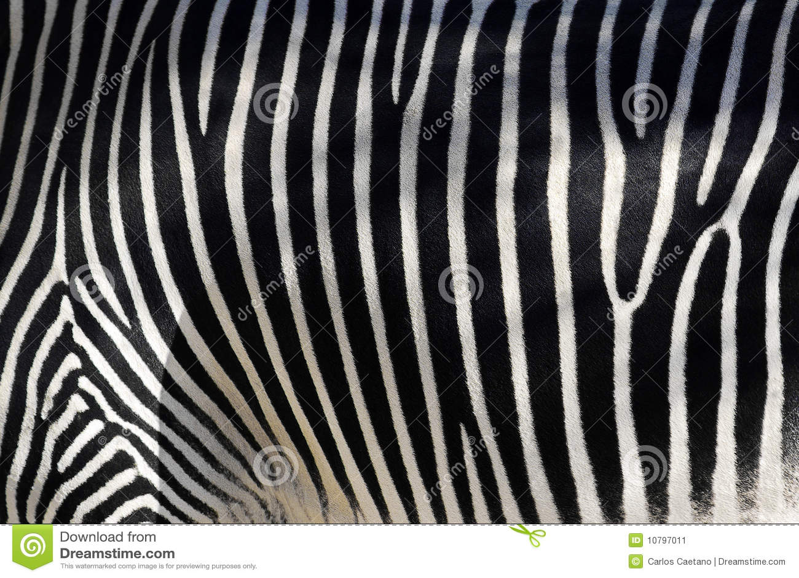 Zebra-Haut