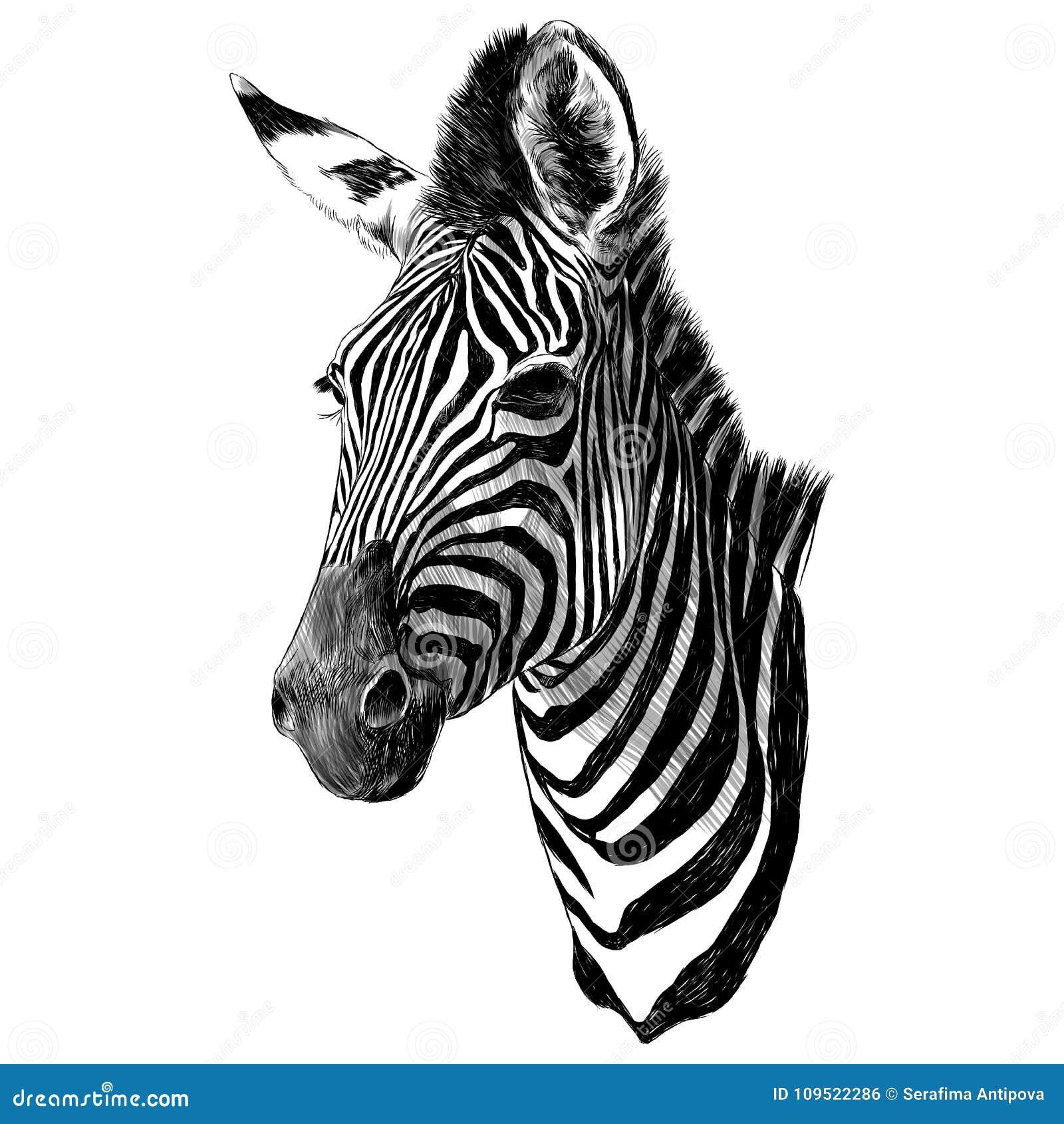 Zebra Head Stock Illustrations U2013 1329 Zebra Head Stock Illustrations Vectors U0026 Clipart ...