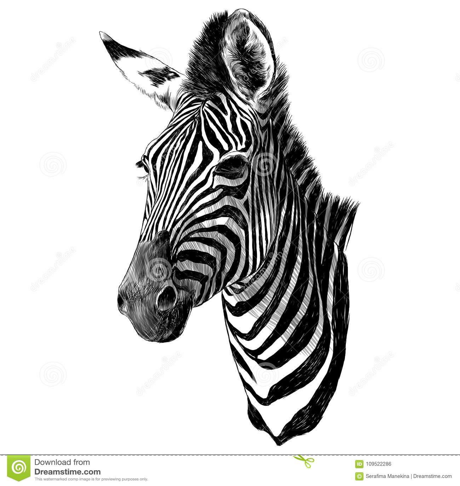 Zebra Head Stock Illustrations – 1,329 Zebra Head Stock ...