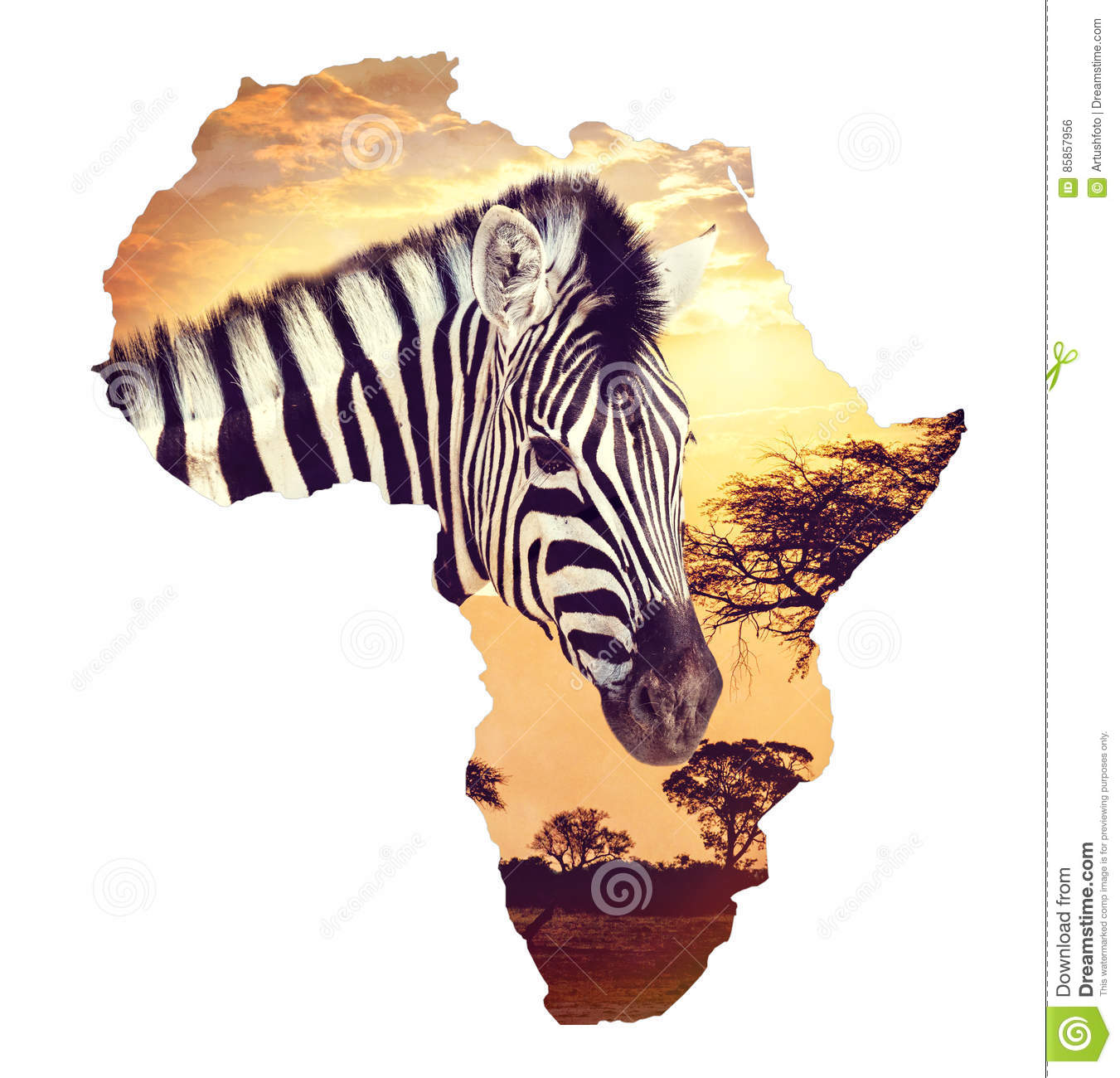 Zebra portrait on african sunset with acacia background. Map, continent of africa. Wildlife and wilderness Map of africa concept