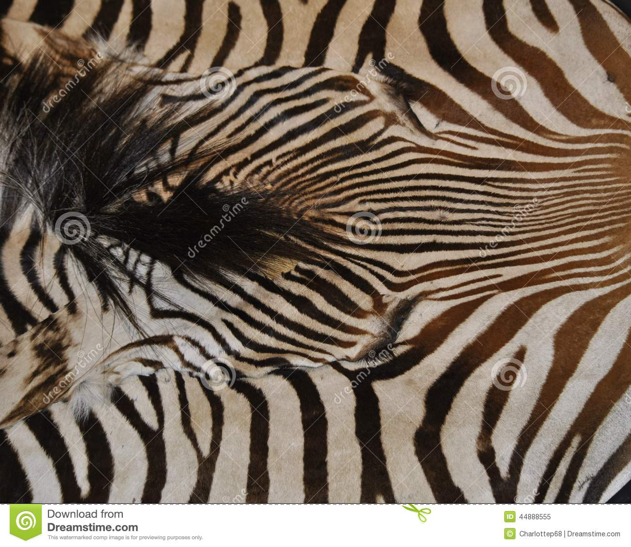 Zebra Print Stock Image. Image Of Striped, Pattern, Unique