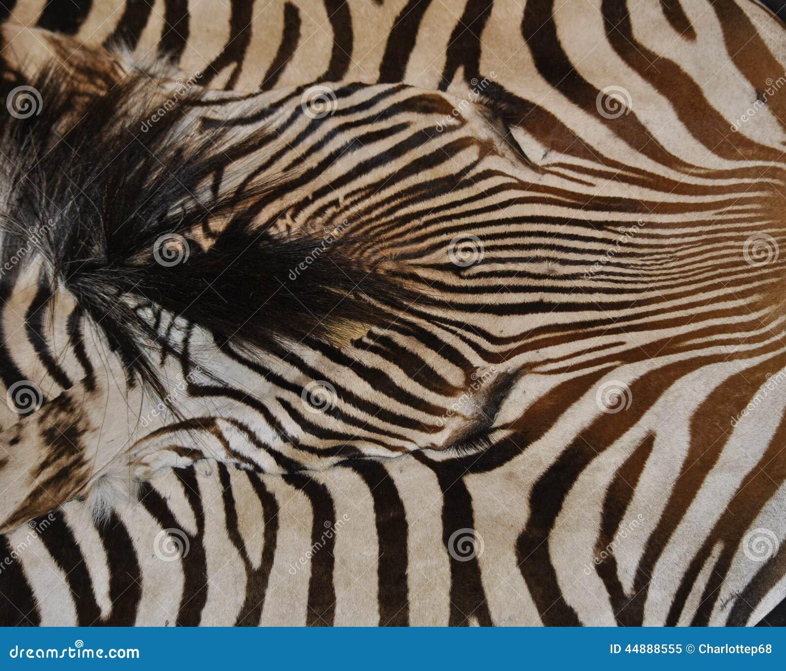 Zebra Pattern Horse Rug: Zebra Print Stock Image. Image Of Striped, Pattern, Unique