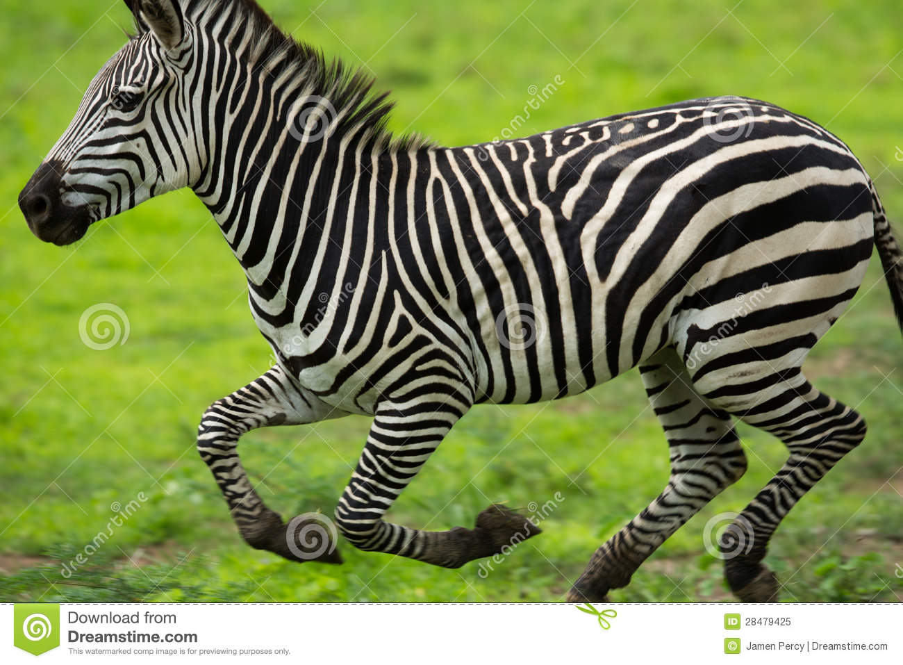 high resolution map of the united states with Royalty Free Stock Photo Zebra Running Image28479425 on Who Owns Who also Stock Photo Full Length Portrait Happy Business Woman Dancing High Resolution Photo Image32810890 additionally Royalty Free Stock Image People Work Construction Sign Image16507626 together with Stock Image Evil Man Image27318091 as well Stock Photos Futuristic Technology Background High Resolution Copy Illustration Image33984023.
