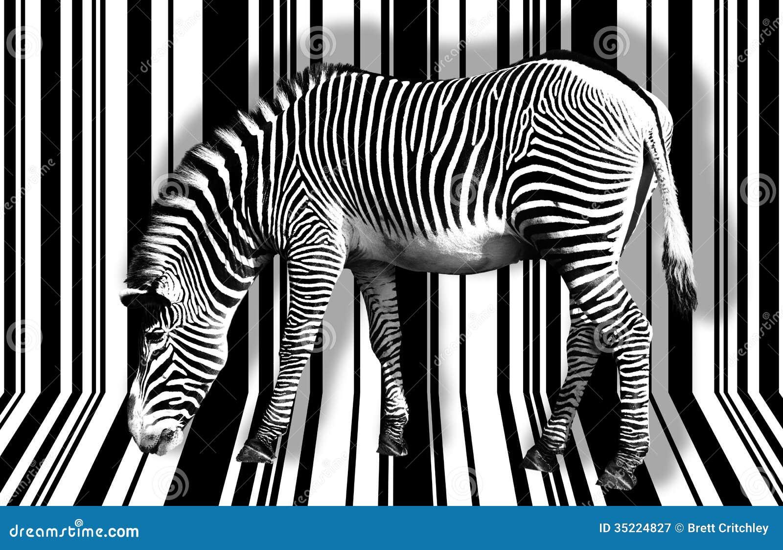 Zebra surreal