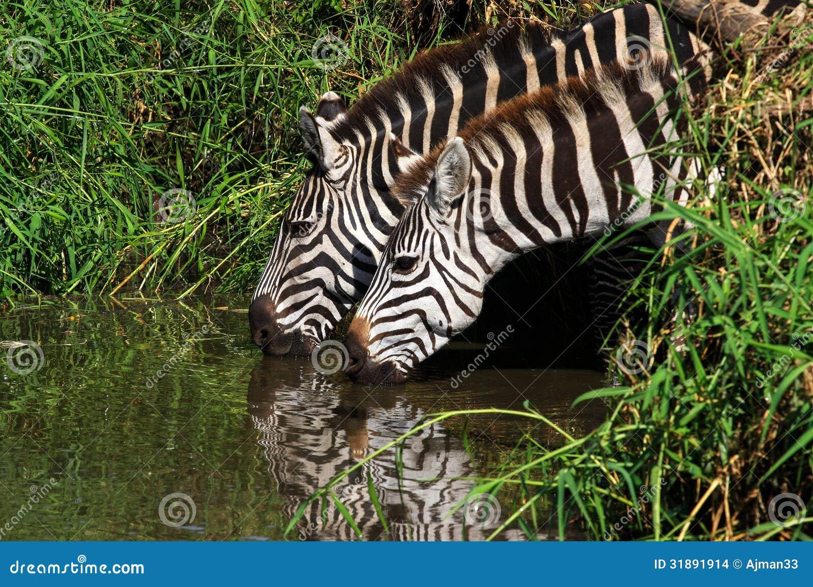 Zebras In Africa Map