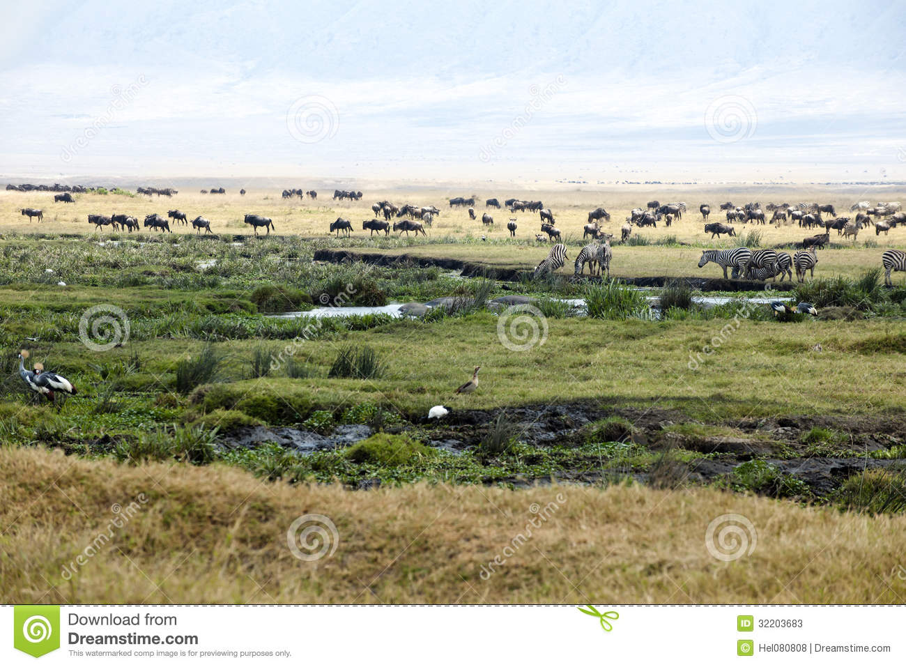 Zebras, Gnus, Hippos, Birds in Ngorongoro Crater