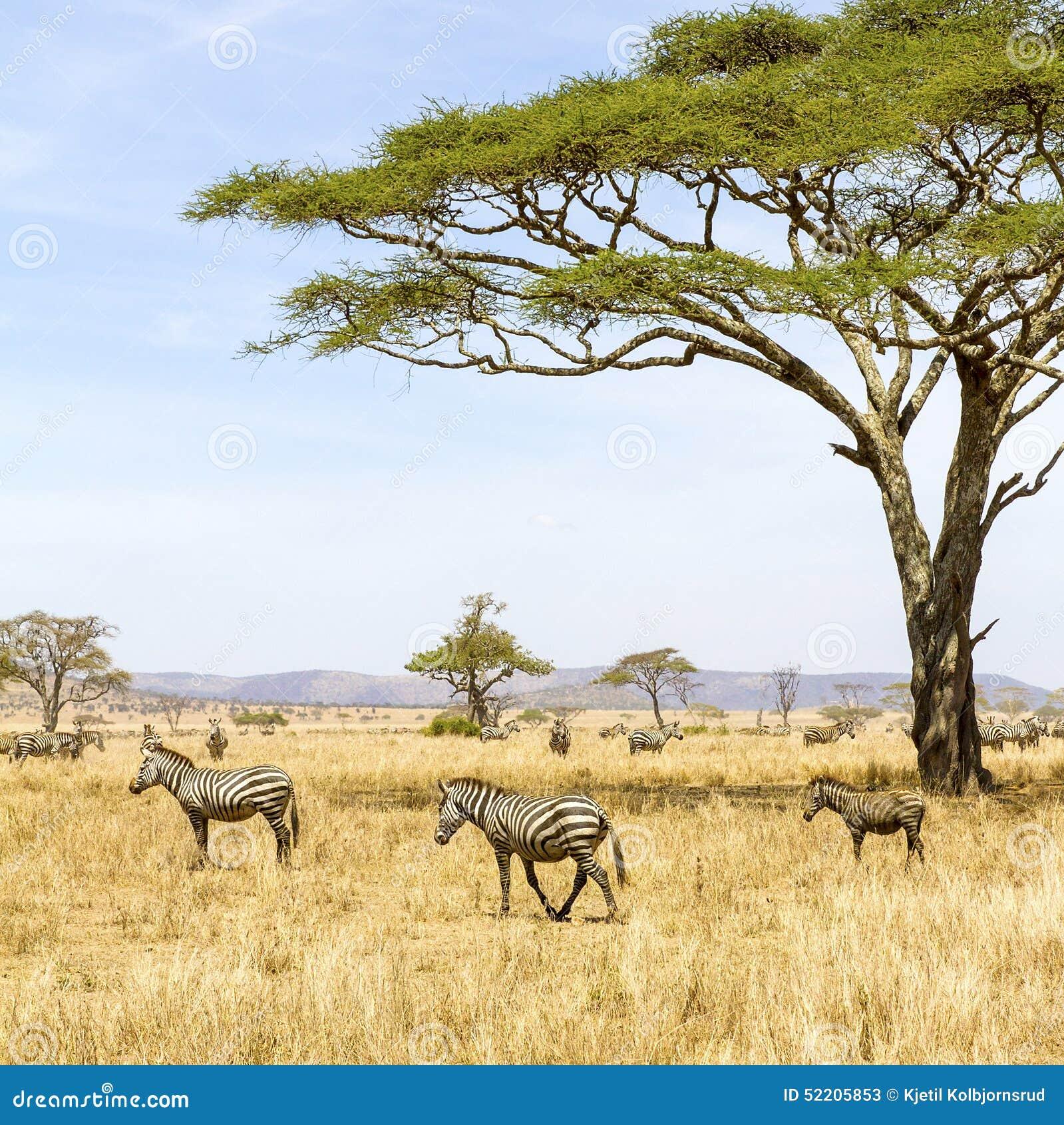 Savanne Afrika