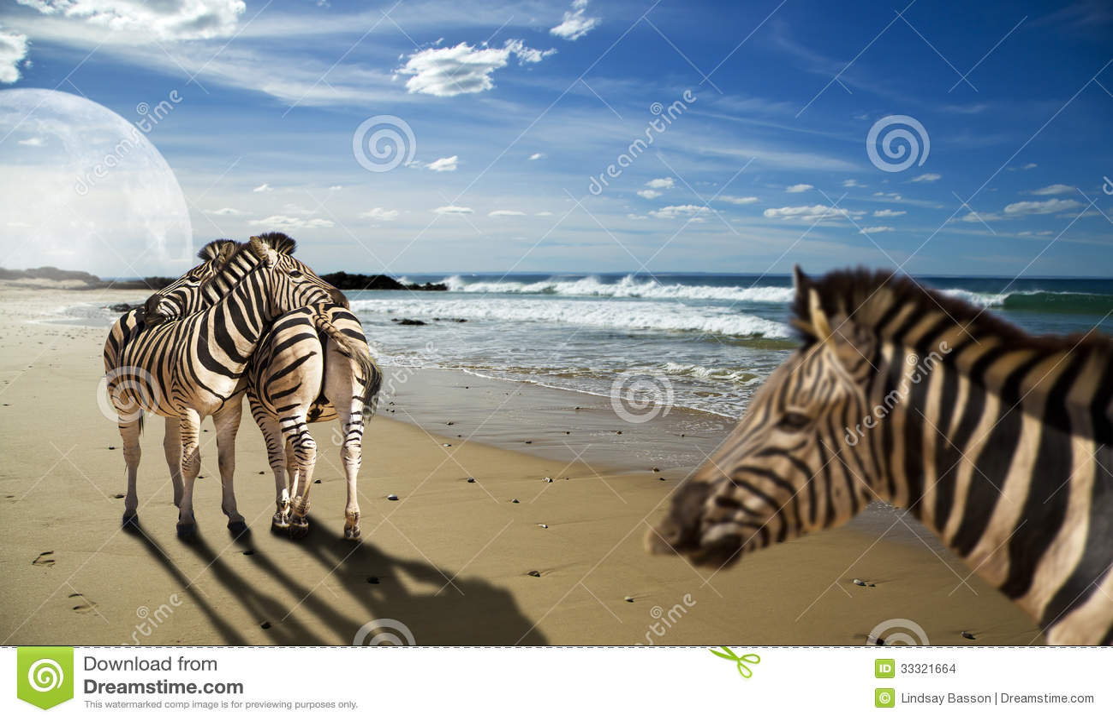 Zebras na praia
