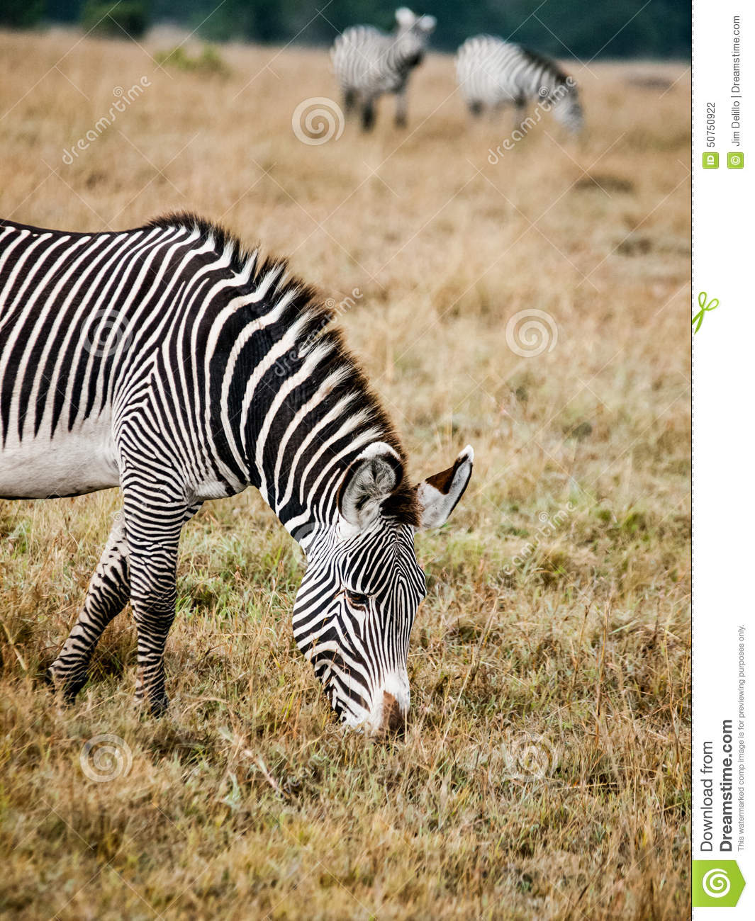 an analysis of the plains zebra animal species of africa The starting date for the inclusion of extinctions was set at 1500 ad following the committee on recently extinct organisms phylum: class endangered animals of the.