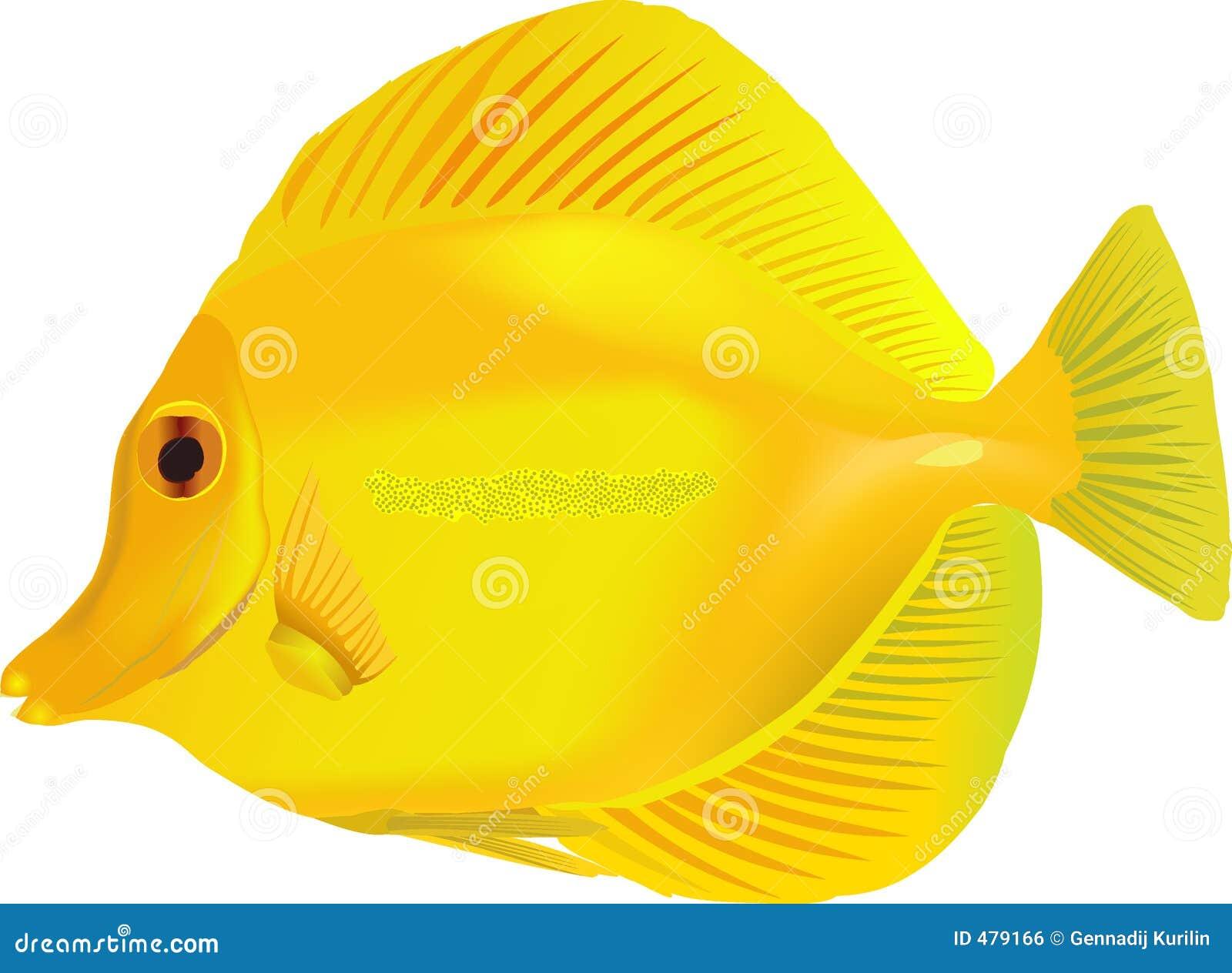 Yellow Fish Clip Art Yellow Fish Related Ke...