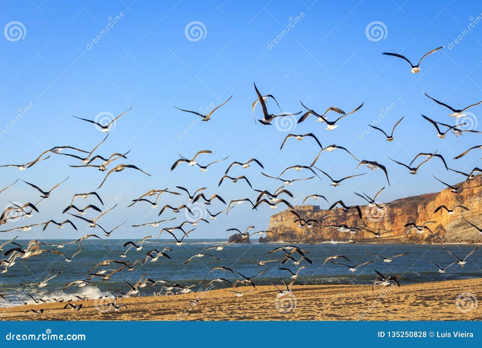 Zeegezicht met zeemeeuwen die bij Nazare-strand vliegen