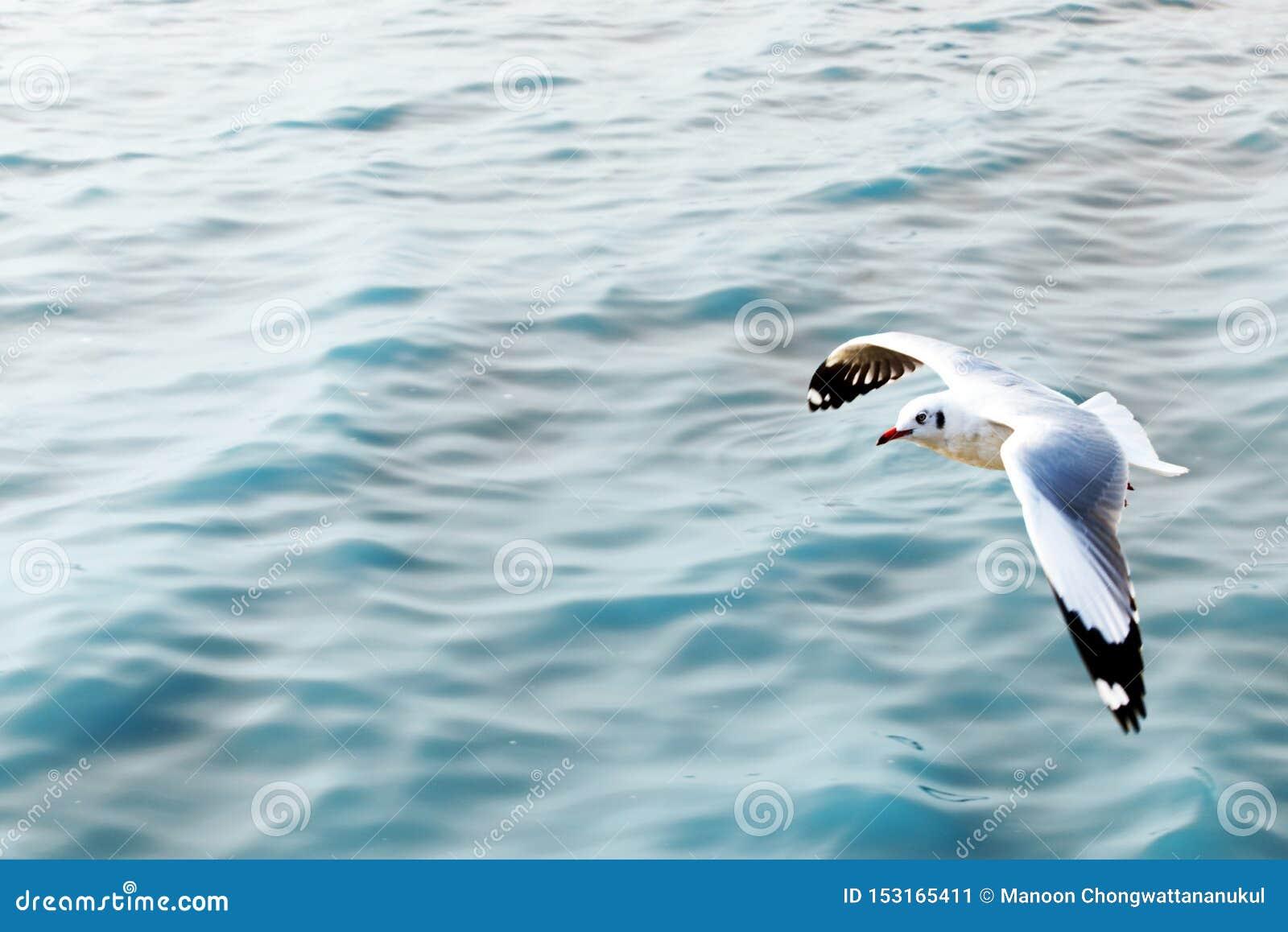 Zeemeeuw die over het blauwe overzees vliegen