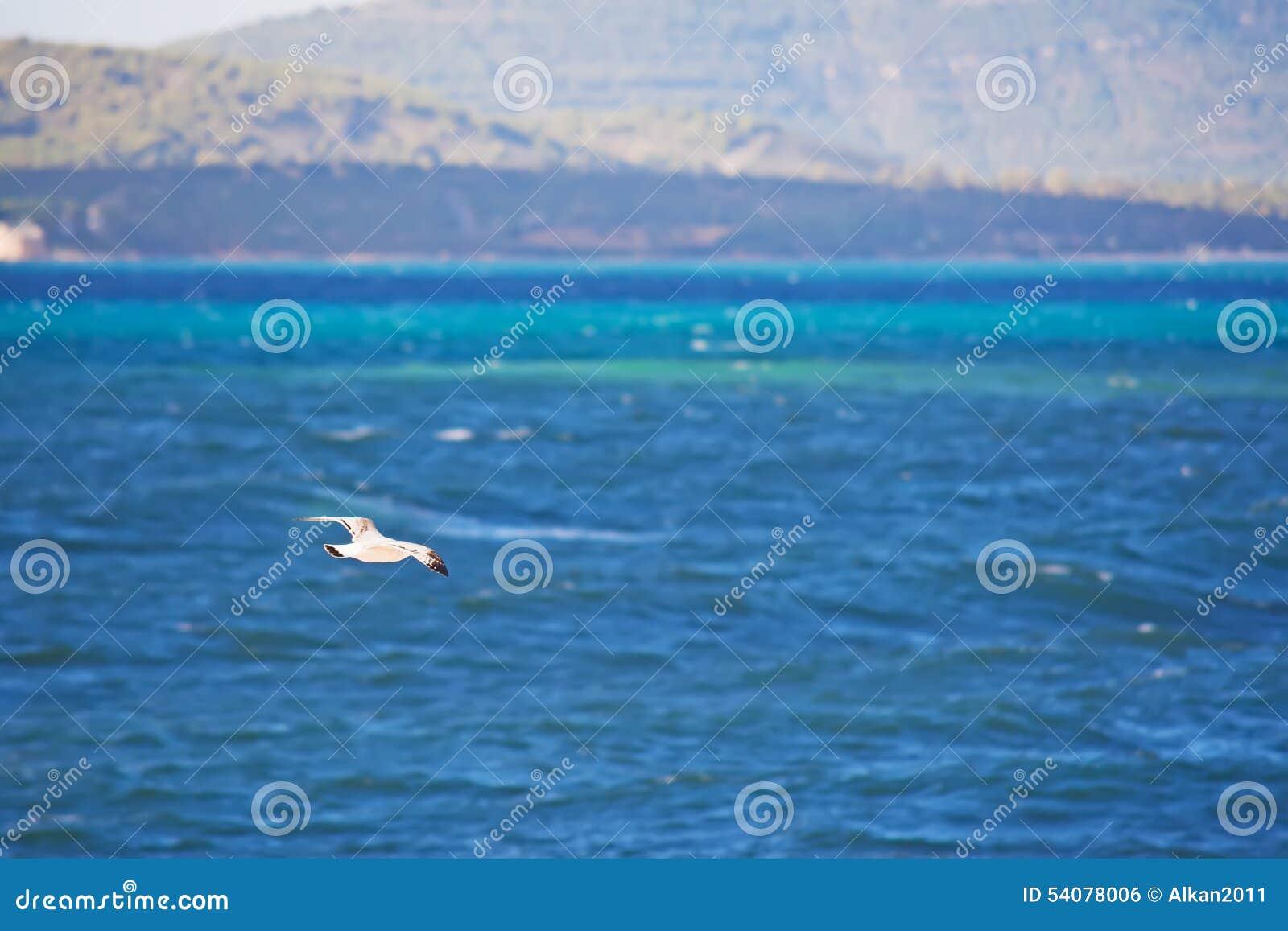 Zeemeeuw die over het overzees vliegt