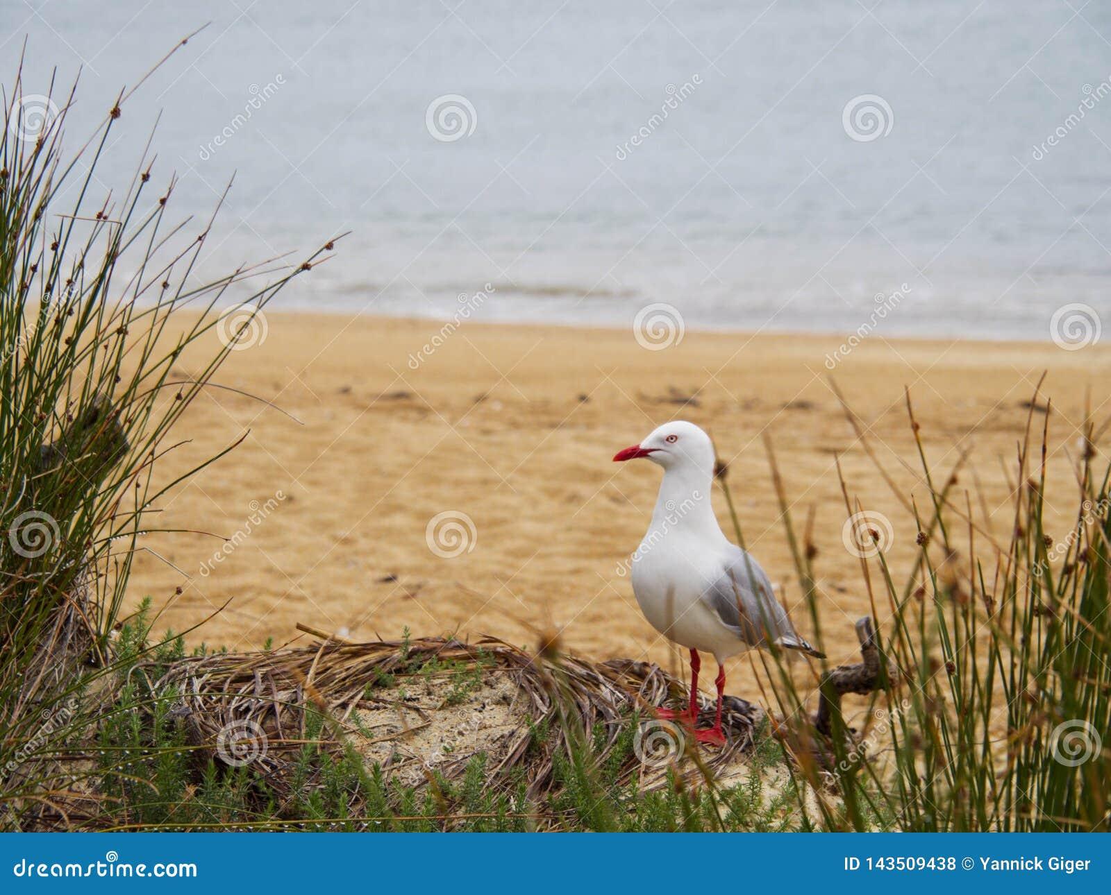 Zeemeeuw die zich op het strand bevinden die zijdelings eruit zien