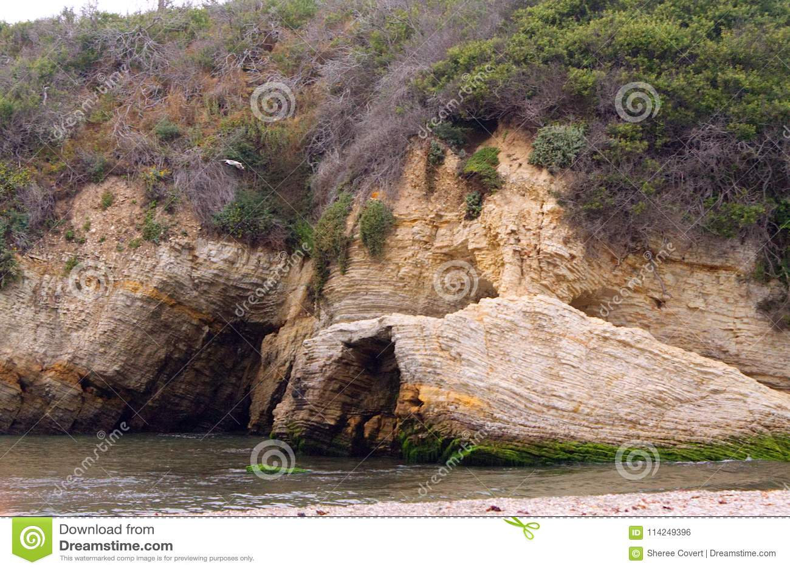 Zeemeeuw, Geologische Klippen, Strand, en Oceaan