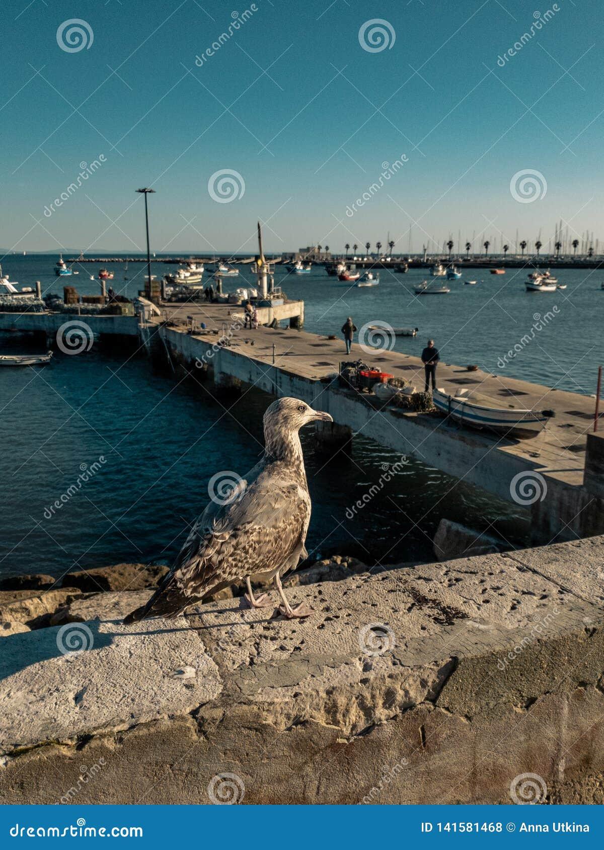 Zeemeeuw nieuwe status op een steenverschansing die de overzeese haven in Cascais, Portugal onder ogen zien