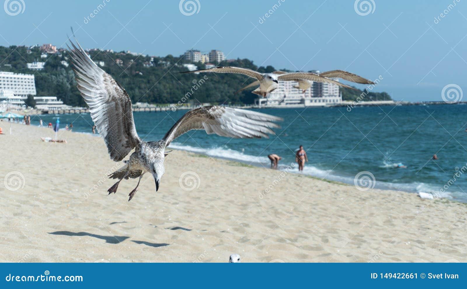 Zeemeeuw op het strand, de Zwarte Zee