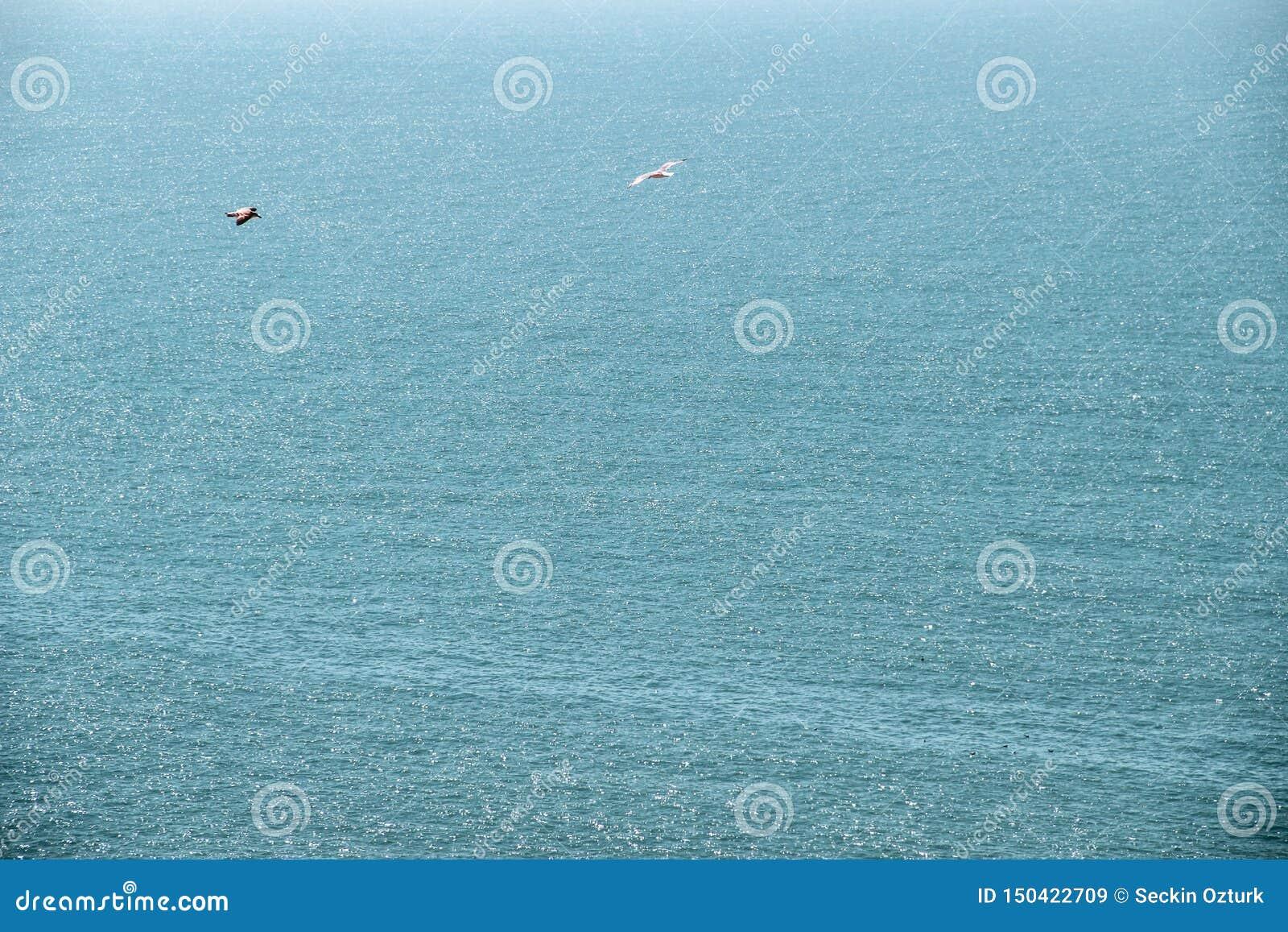 Zeemeeuwen die bij de hemel vliegen