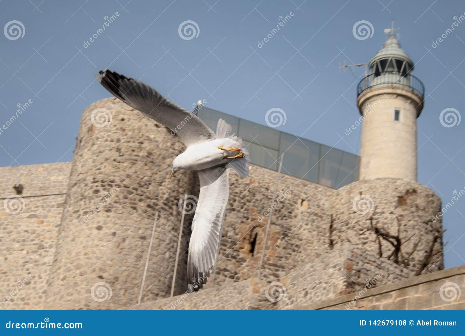 Zeemeeuwen die door Vuurtoren, Castro Urdiales vliegen