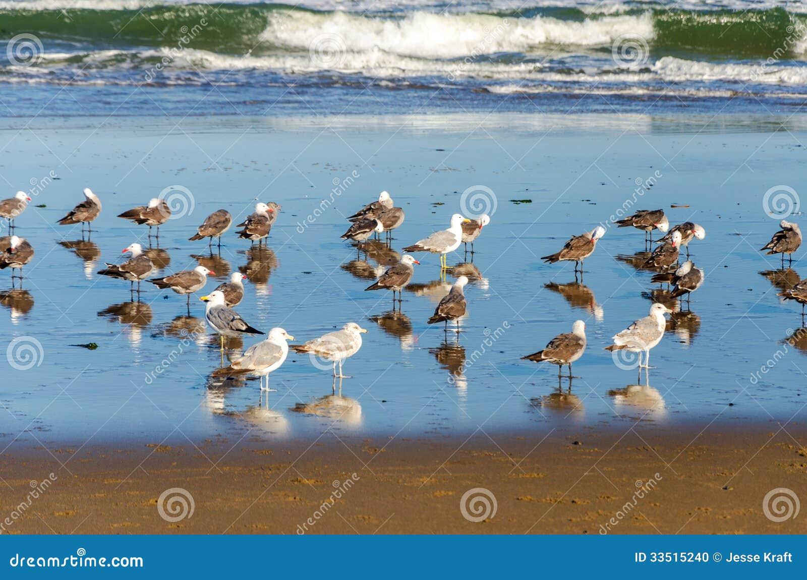 Zeemeeuwen op een Strand
