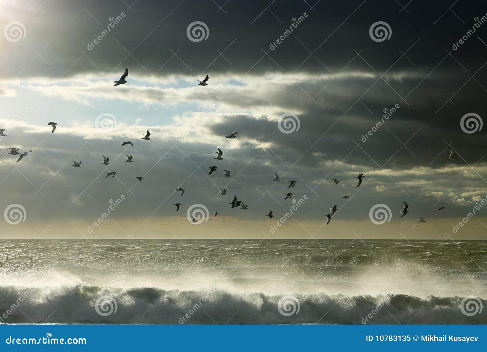 Zeemeeuwen tussen hemel en oceaan