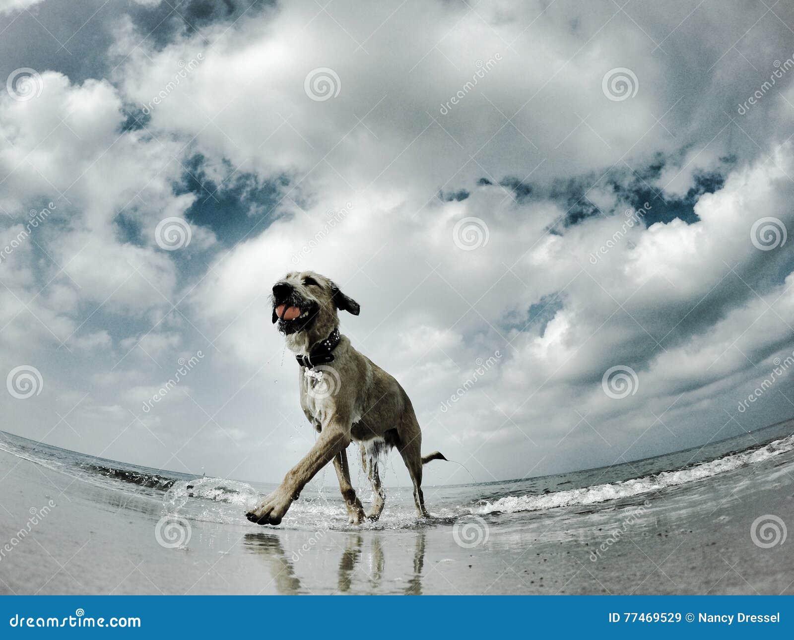 Zeemeeuwenmening aan een hond