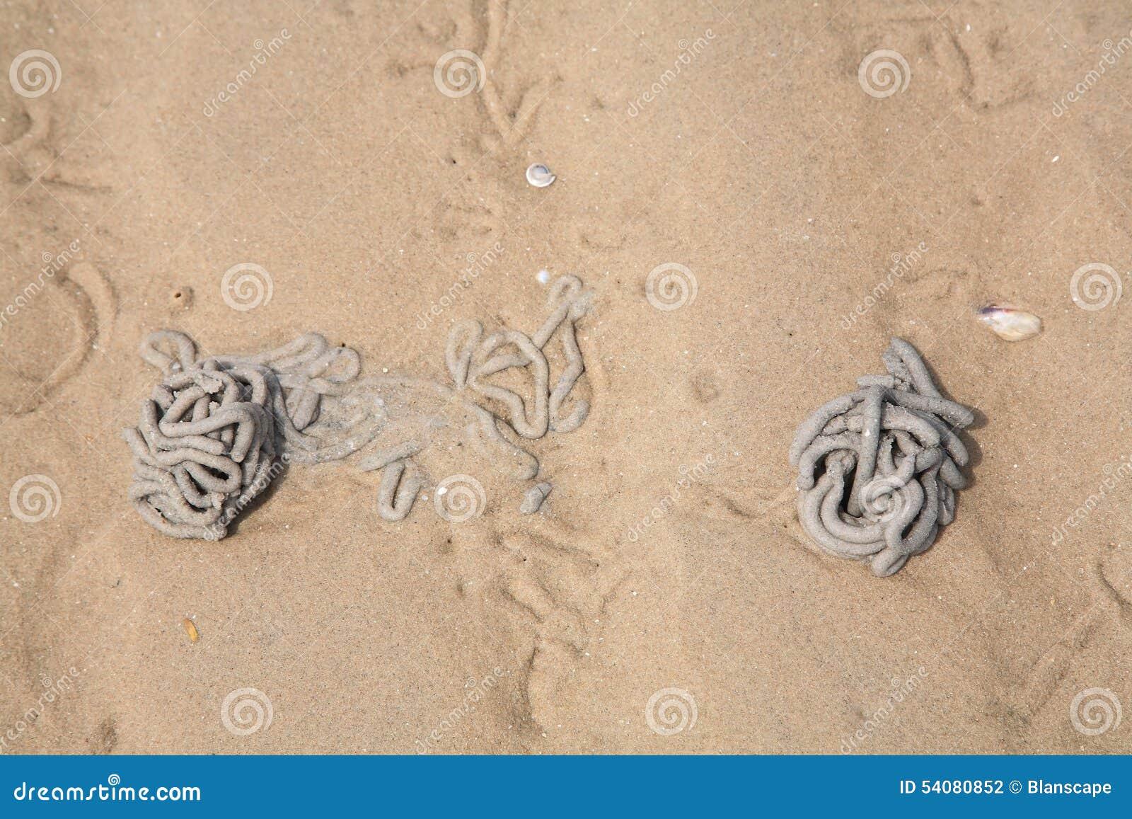 Zeepier of sandworm gegoten op zand