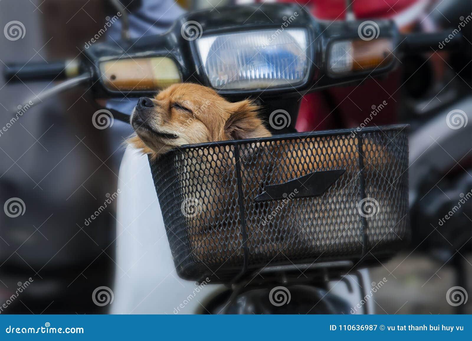Zeer leuke puppy de hond slaapt voor motor