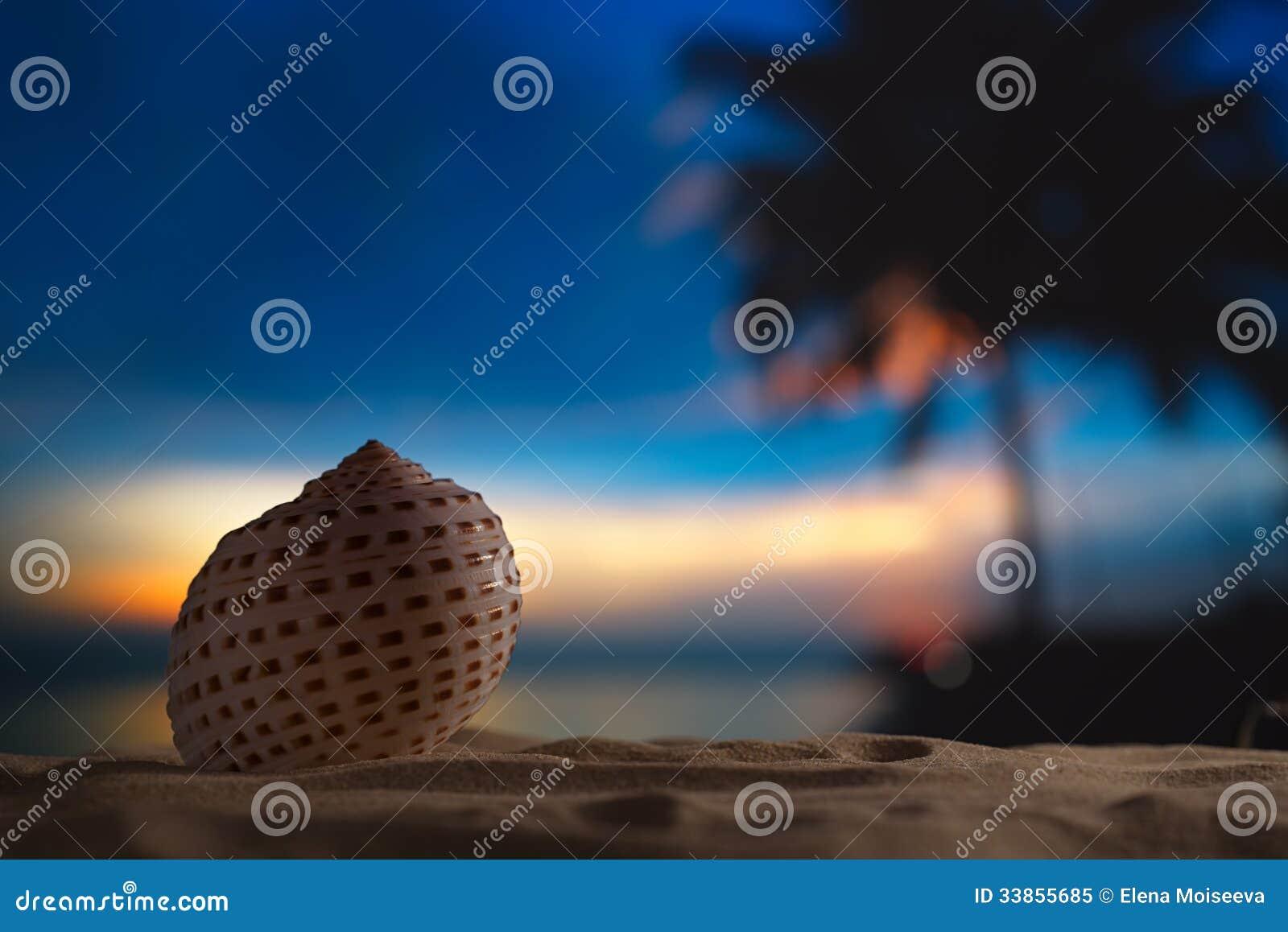 Zeeschelp in het overzees, zonsopgang, donker licht