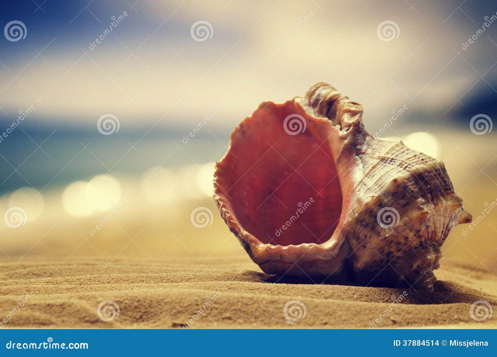 Zeeschelp in het zand