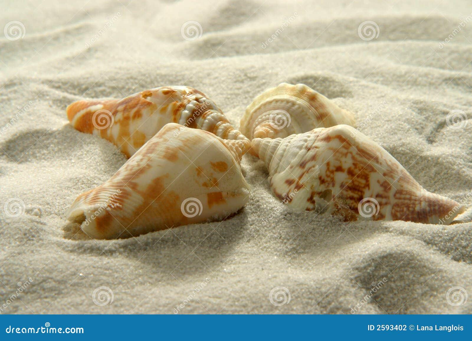 Zeeschelpen (3)