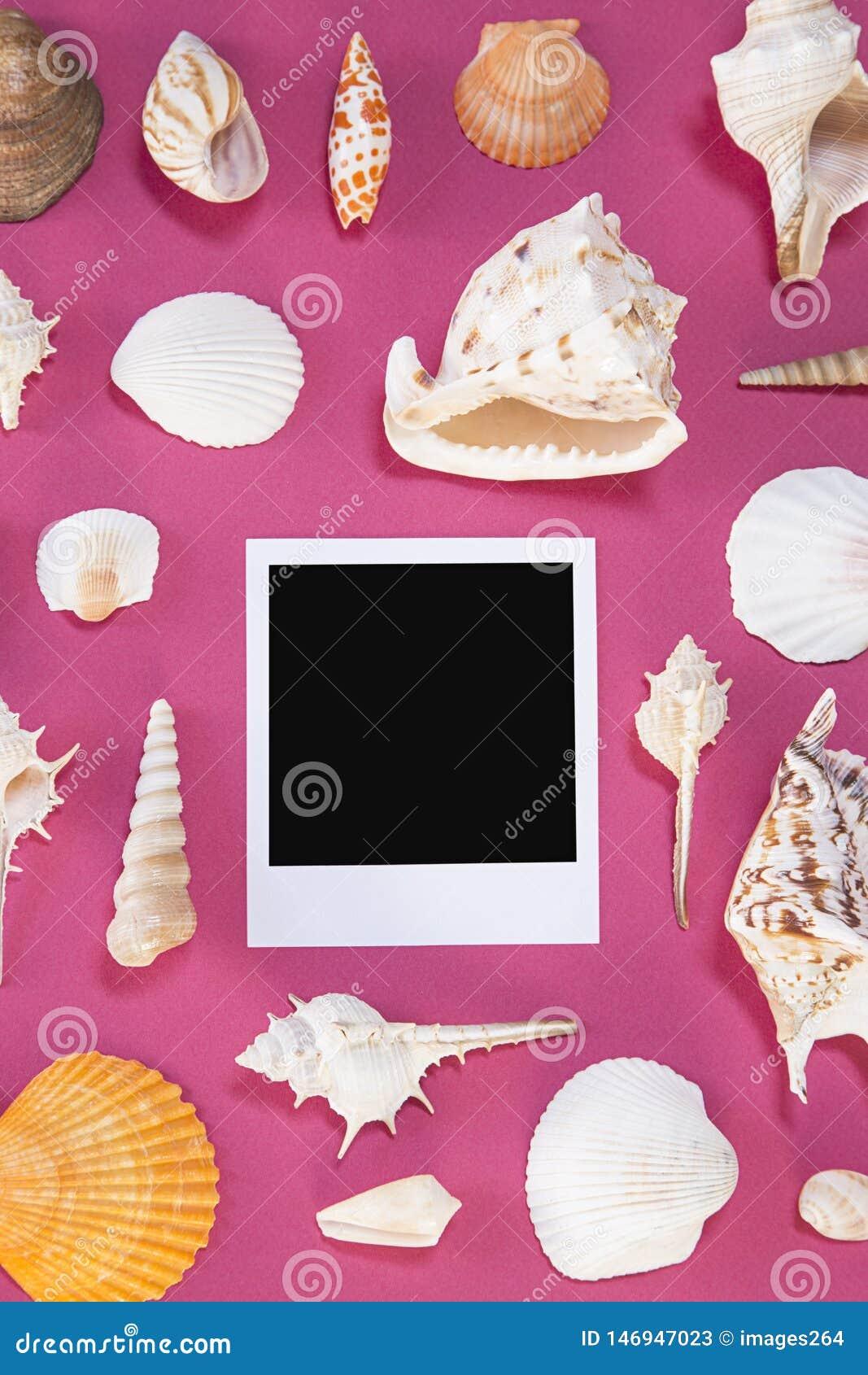 Zeeschelpen