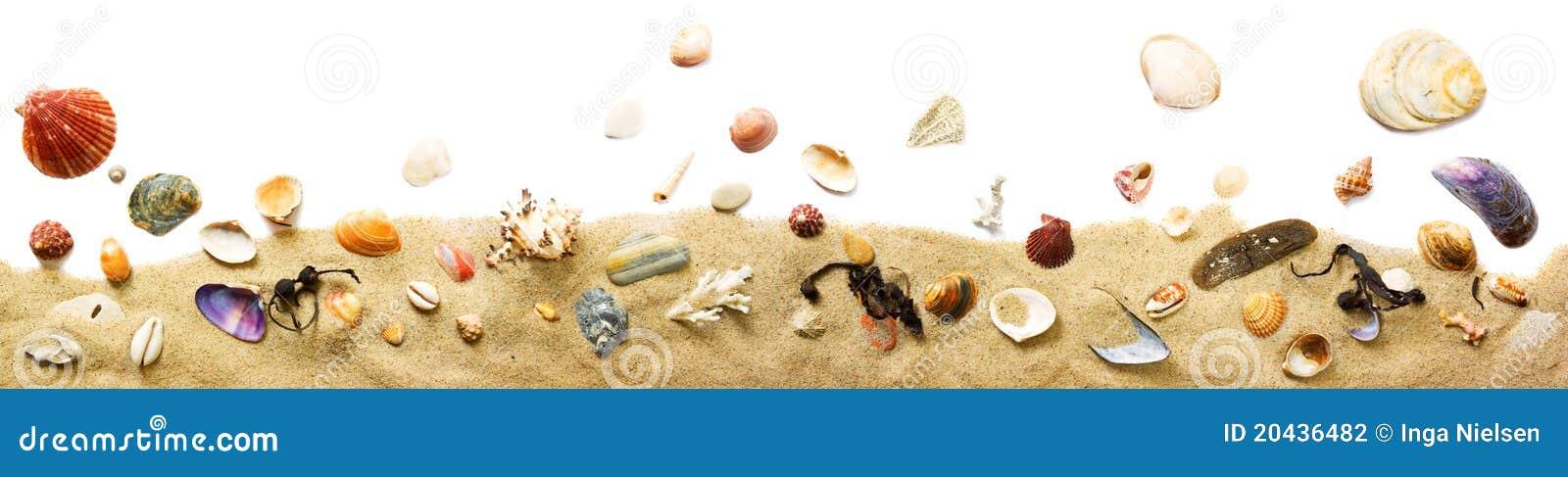Zeeschelpen en zandgrens