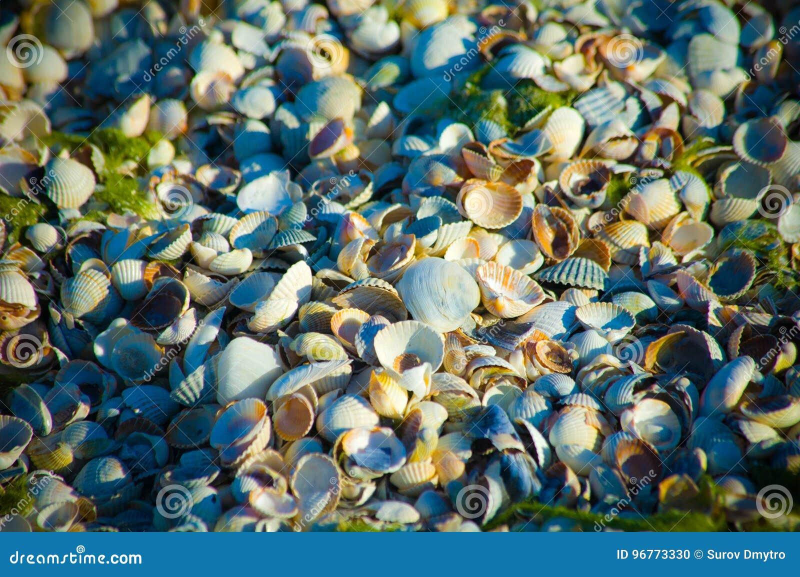 Zeeschelpen op een zandig strand in detail
