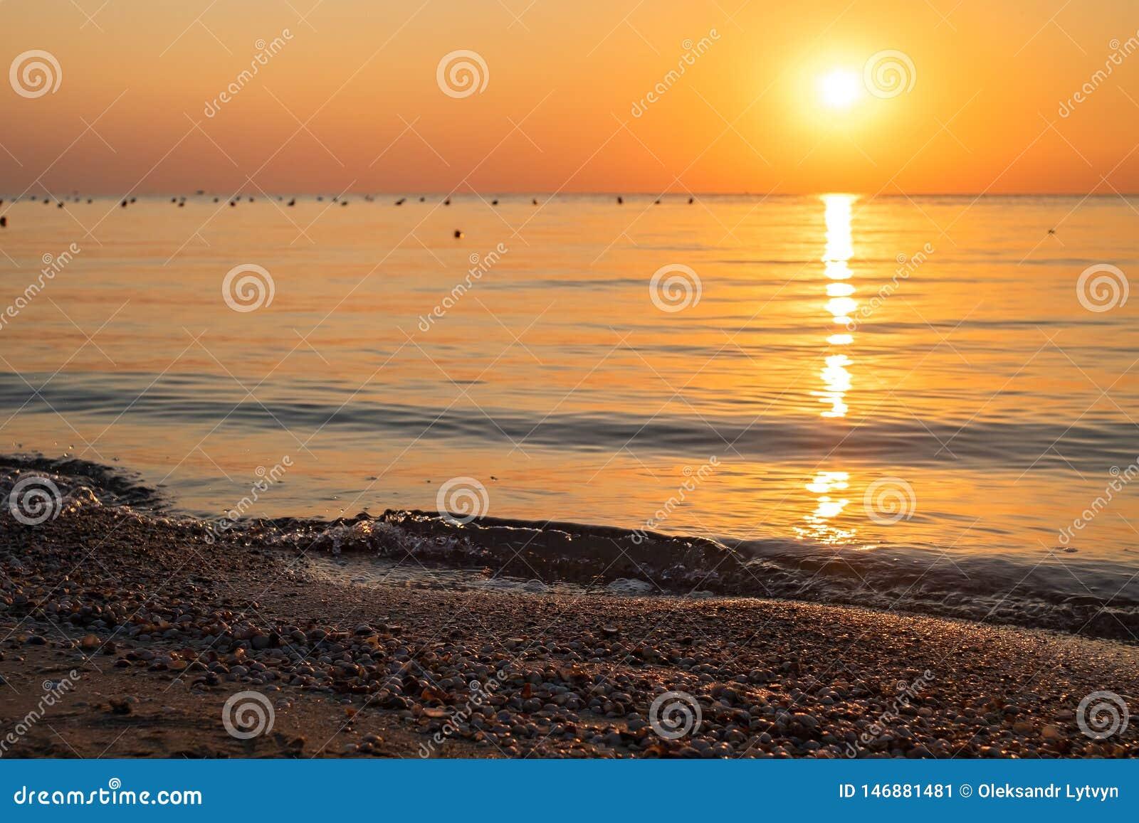 Zeeschelpen op het overzeese strand tegen de achtergrond van een kleurrijke dageraad Nadrukcontrole