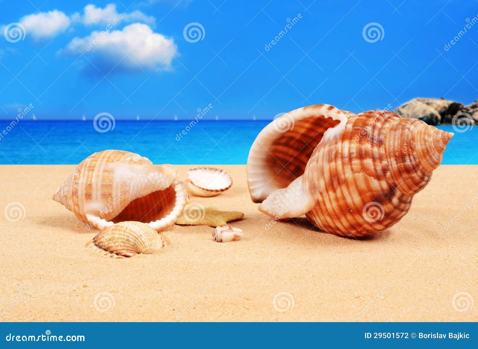 Zeeschelpen op het zandige strand