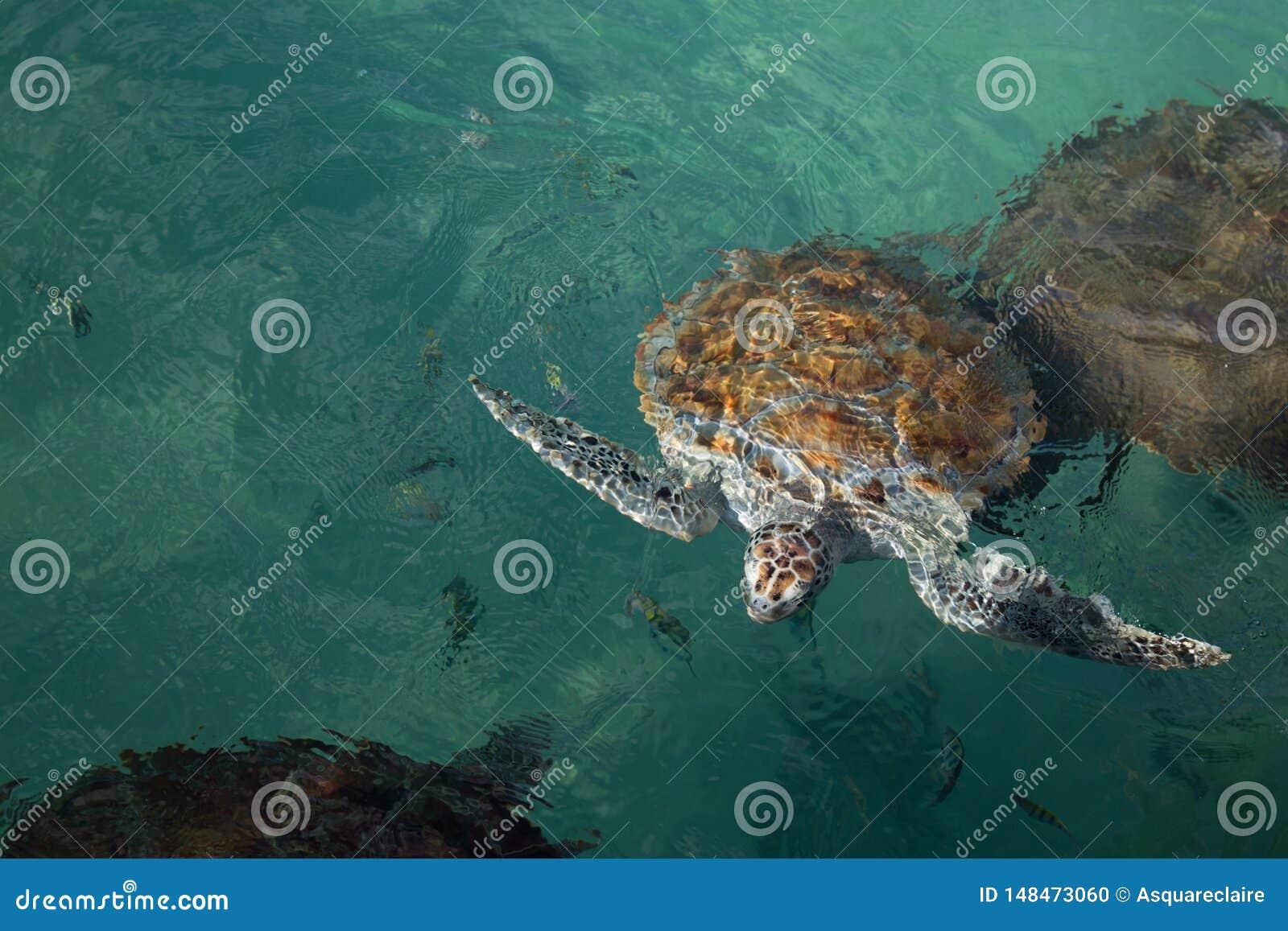 Zeeschildpad dichte eerlijke hoofd en vinnen aan oppervlakte van water