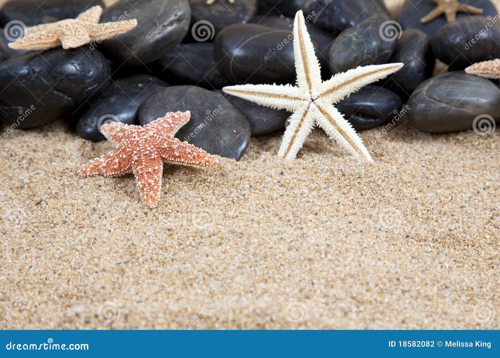 Zeester en rotsen