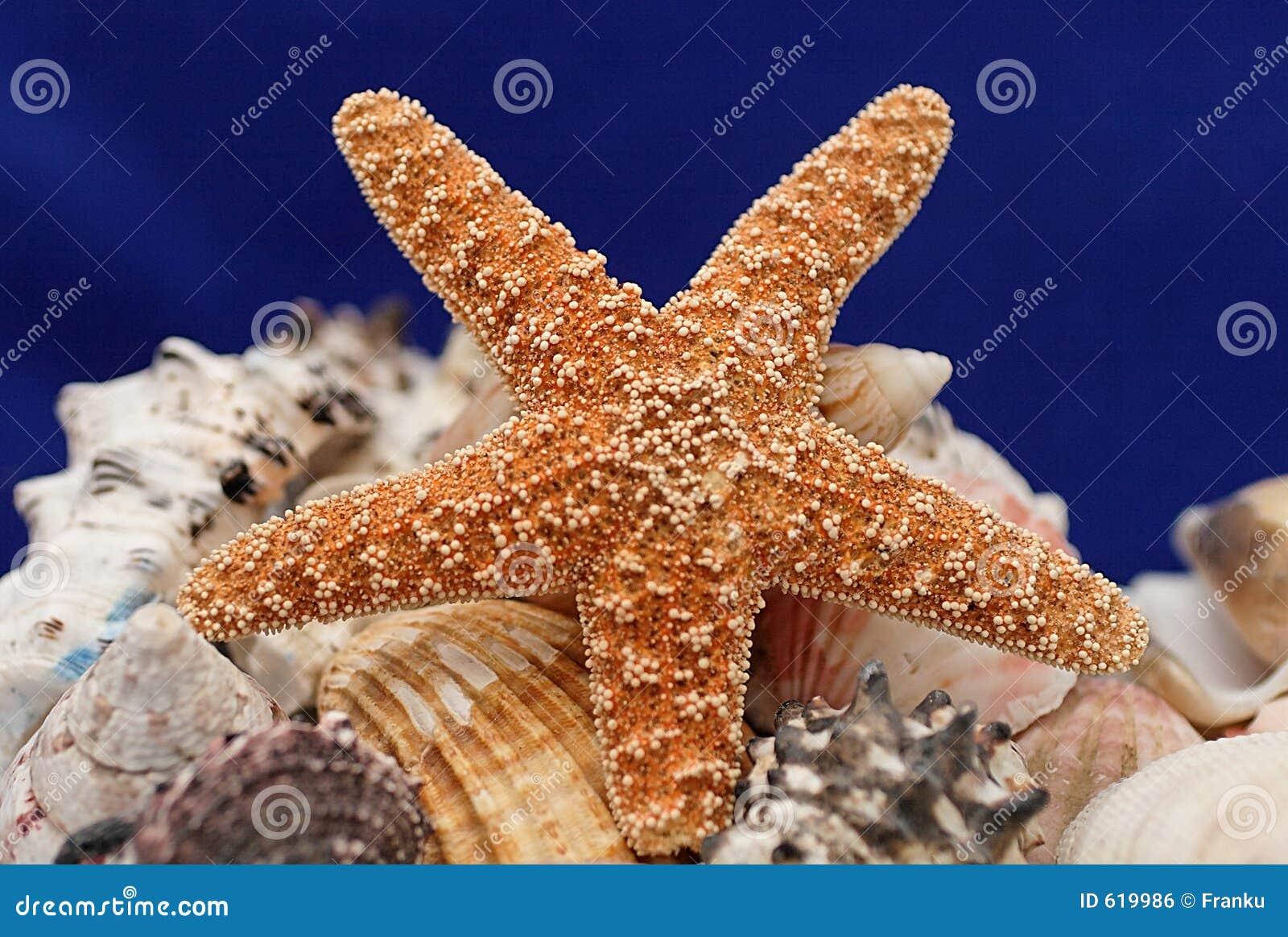 Zeester en shells