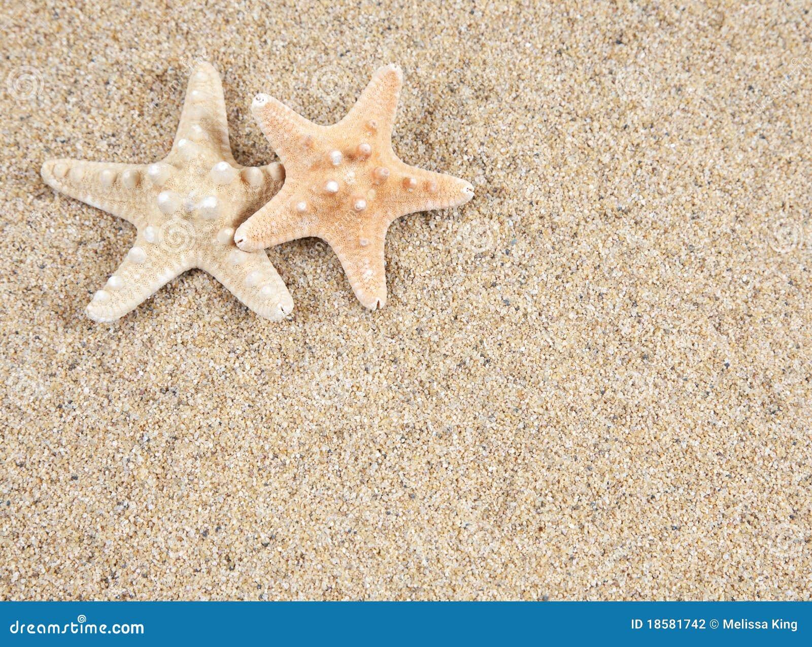 Zeester en zand