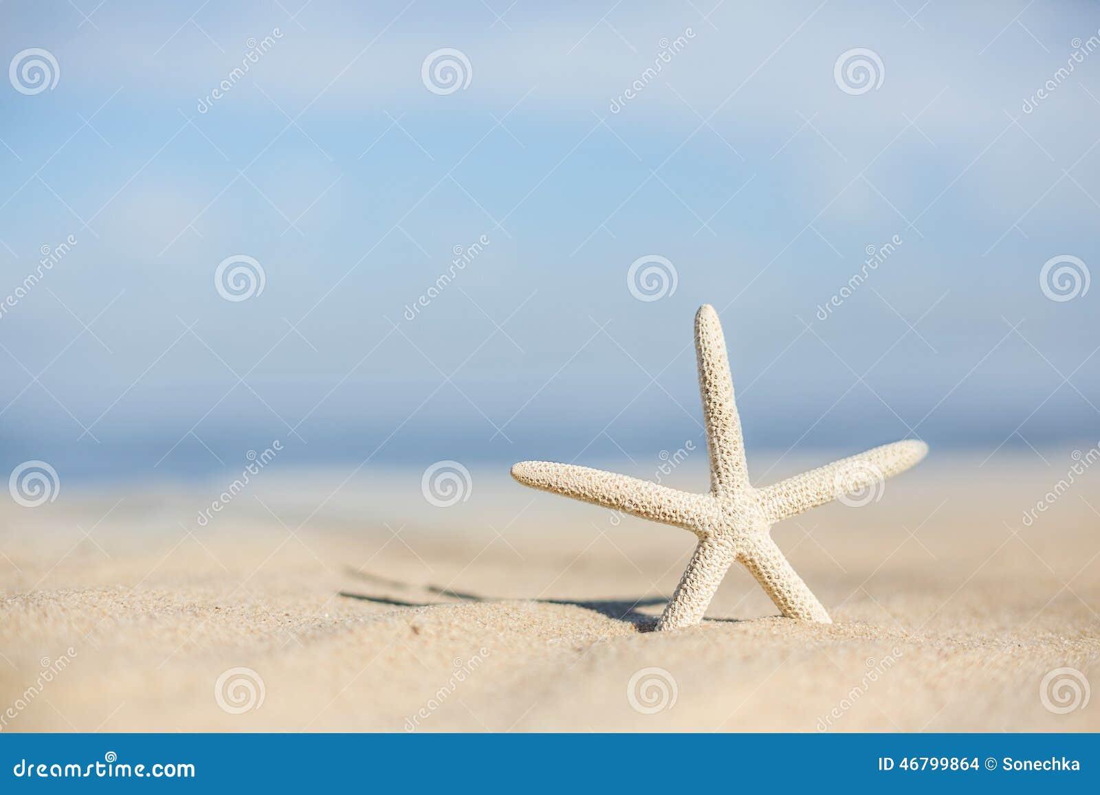 Zeester op een strandzand