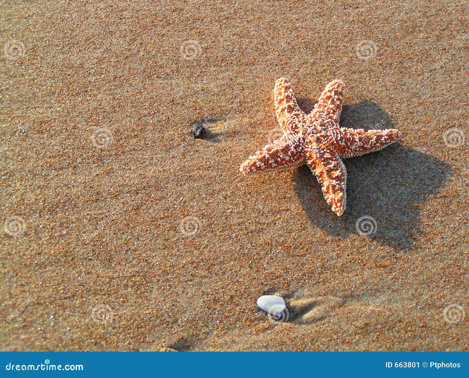 Zeester op Zandig Strand