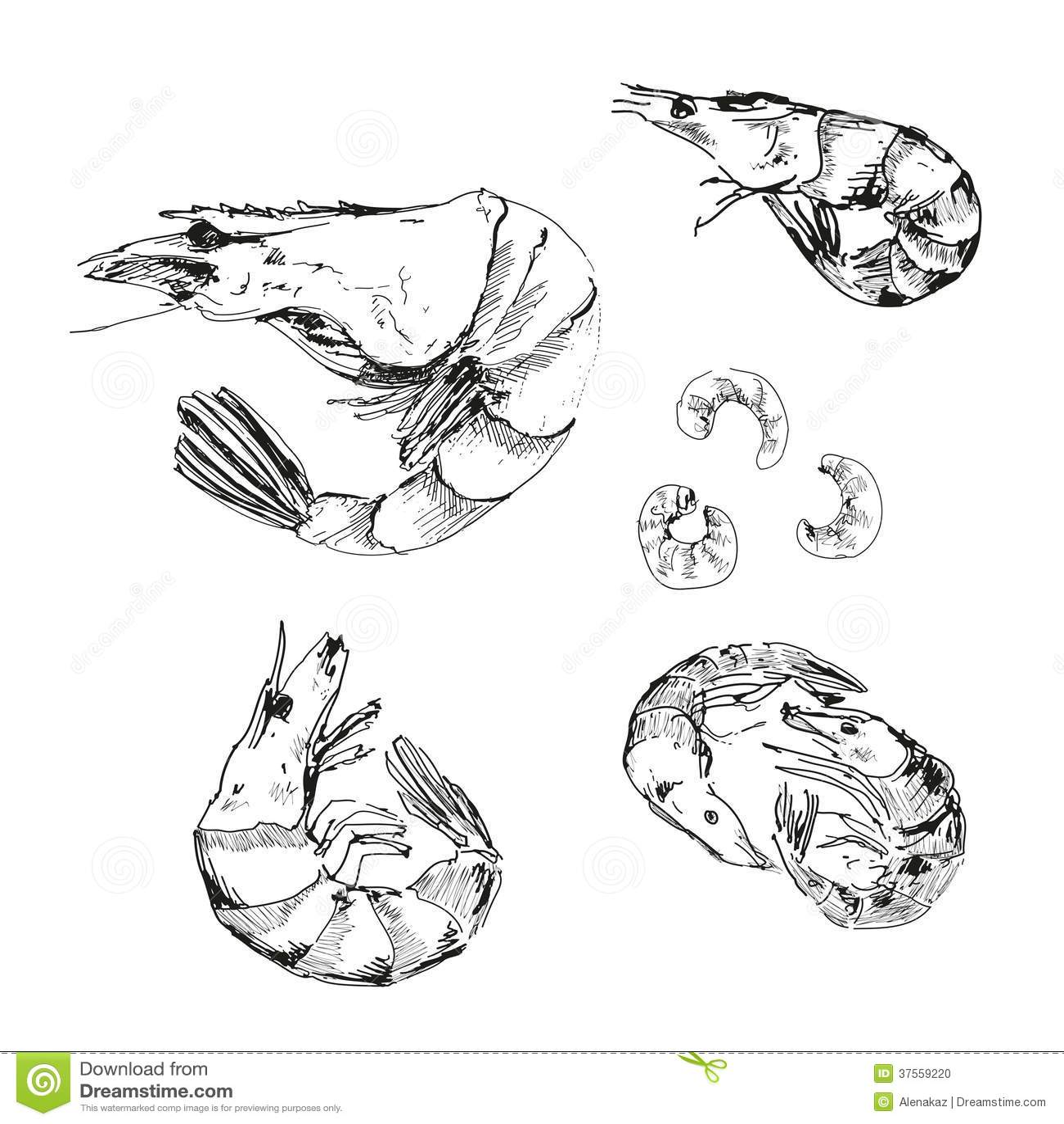 Zeevruchten. Garnalen.